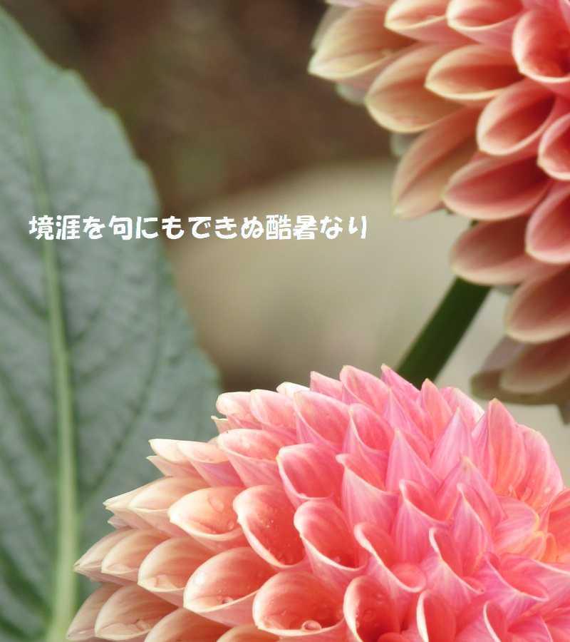 f0117041_05213404.jpg