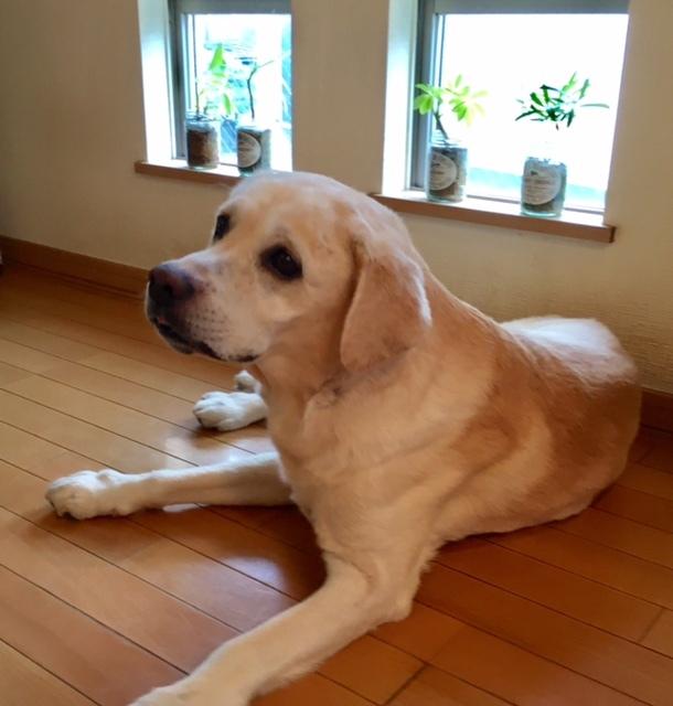 Dog shampoo   ほっと一安心♪_a0165160_12544876.jpg