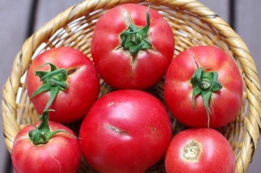 「訳ありトマト」の追加承ります。_c0110869_13121164.jpg