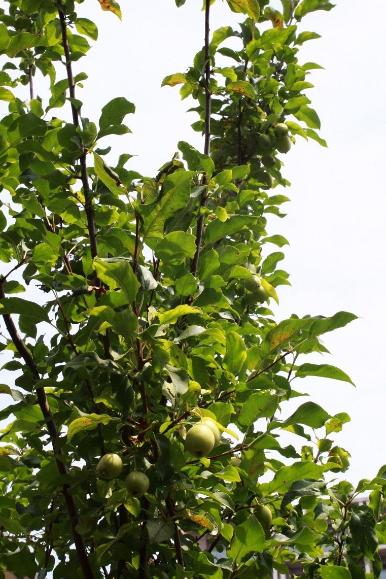リンゴは何も言わないけれど_a0107574_22010754.jpg