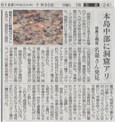 洞窟から新種のアリを発見しました_a0247891_02202893.jpeg