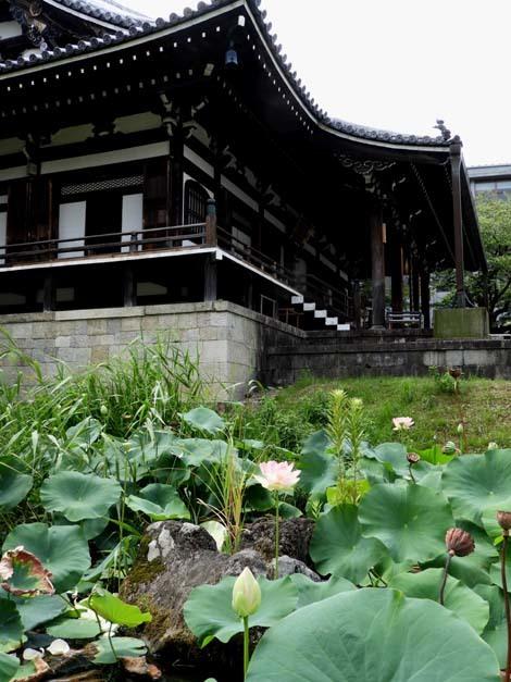 智積院の夏 蓮花咲く_e0048413_16281056.jpg