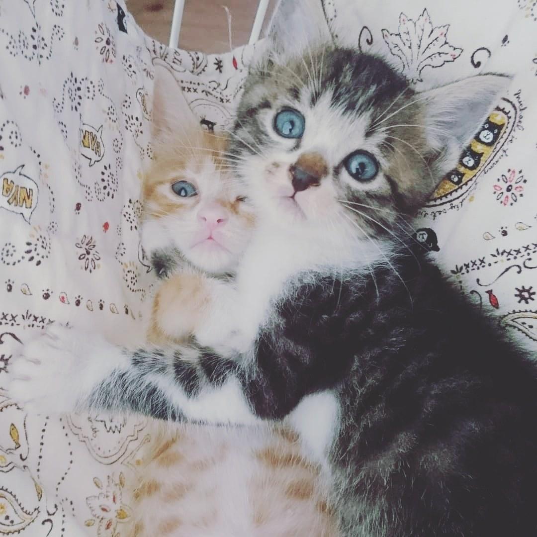 子猫たち_b0235714_12064159.jpg