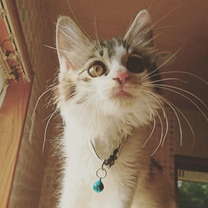 子猫たち_b0235714_12071111.jpg