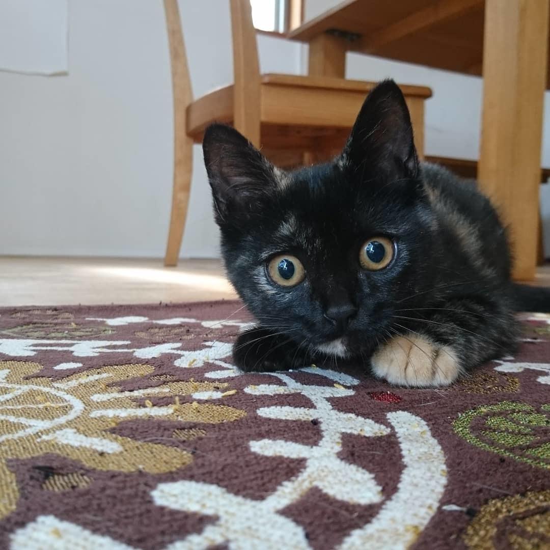 子猫たち_b0235714_12085857.jpg
