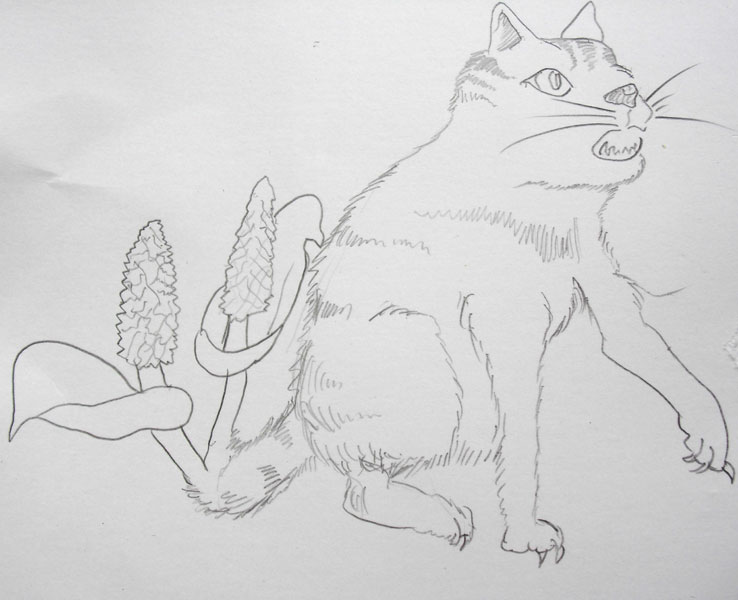 動植物へなちょこ 猫芭蕉 (投稿作品)_b0025023_958158.jpg