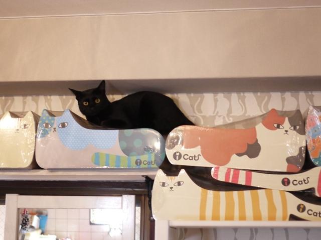 ちっちゃな黒猫柄猫 めりぃぽぴんず編。_a0143140_22342682.jpg