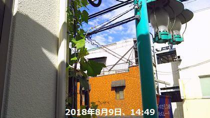 d0051601_14162536.jpg