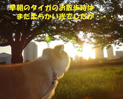 f0121712_09330662.jpg