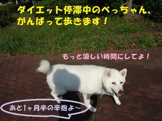 f0121712_09410006.jpg