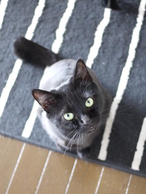 猫のお留守番 かんべくん編。_a0143140_21290284.jpg