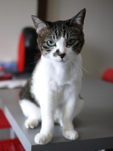 猫のお留守番 ピコちゃん編。_a0143140_21330807.jpg