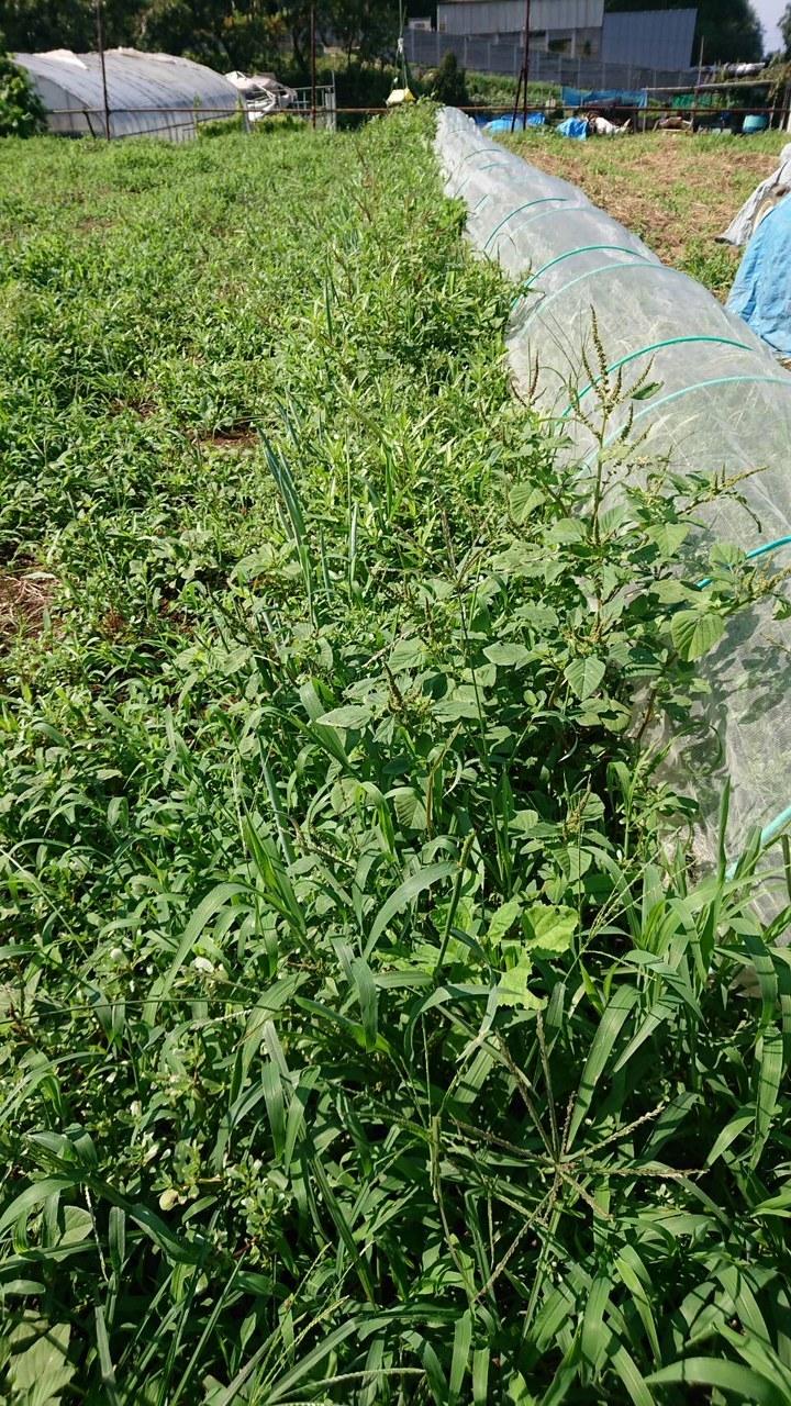 各畝の雑草取りとバターナッツ収穫始めました  _c0222448_13471370.jpg
