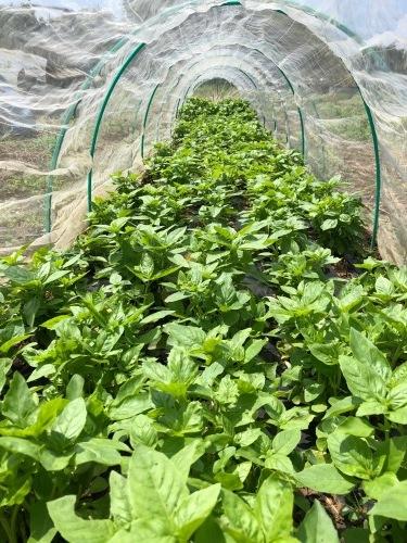 各畝の雑草取りとバターナッツ収穫始めました  _c0222448_14084377.jpg