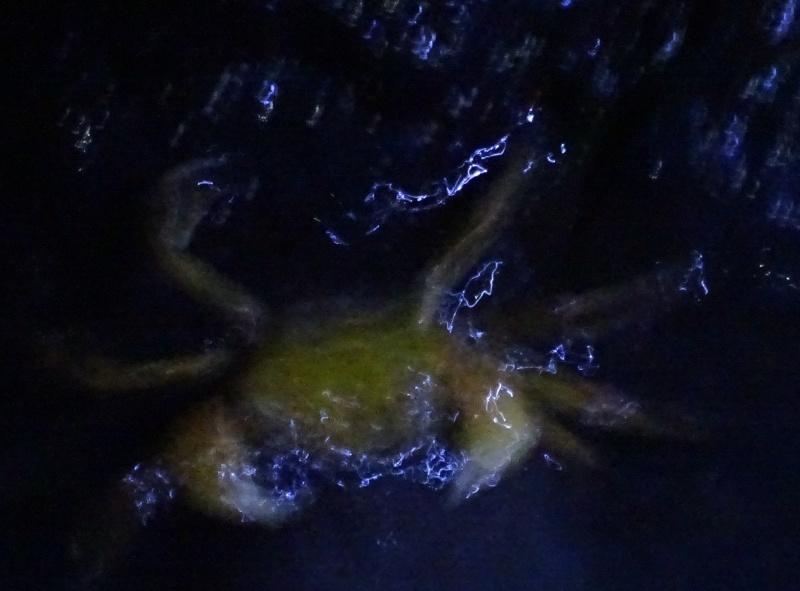 「カニ放仔観察会」リハーサル・・・せんなん里海公園内あふれ滝_c0108460_23210386.jpg