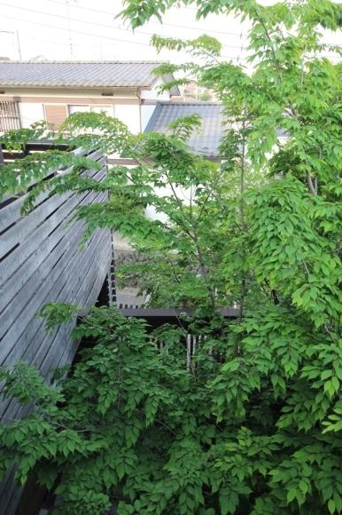 庭の樹木_c0310571_21185777.jpg
