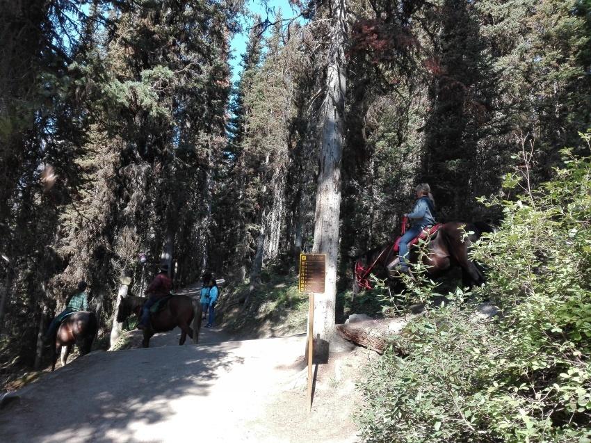 レイクルイーズを上から見れる絶景ハイキング_d0112928_12465847.jpg