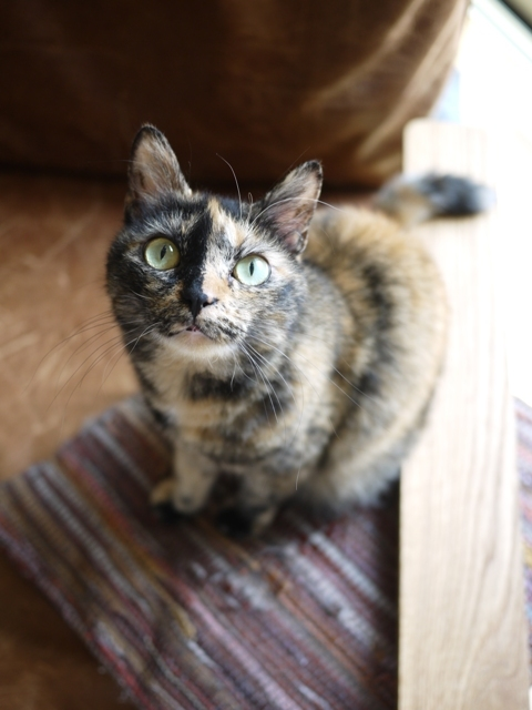 猫のお留守番 さんかちゃん編。_a0143140_23514076.jpg
