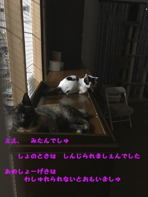 d0393041_21301495.jpg