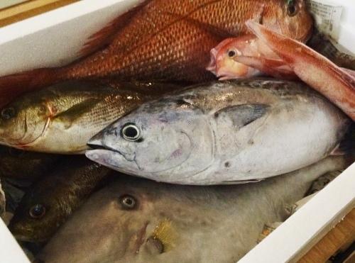 今日のお魚_b0290049_20341821.jpeg