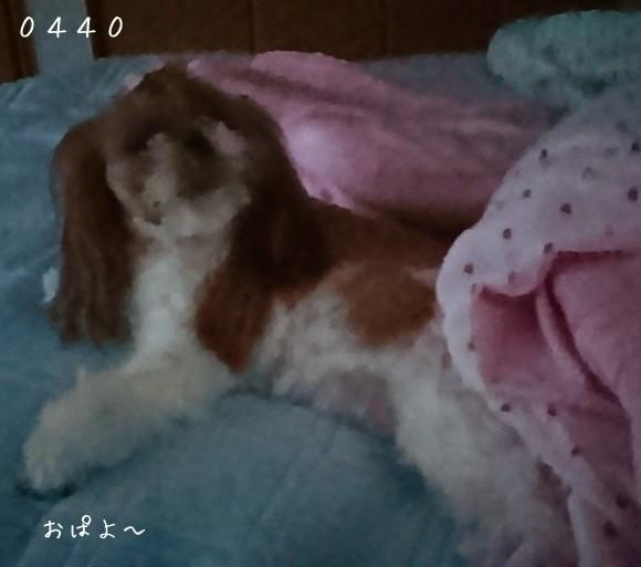 b0306158_11212337.jpg