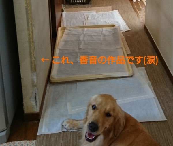 b0112568_19204136.jpg