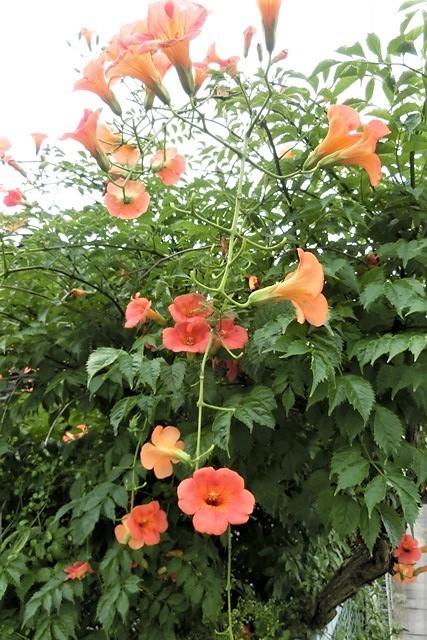 藤田八束の鉄道写真@青森で見つけた花園と貨物列車絶好のコラボトライアングル地帯・・・トライアングル地帯の鉄道写真_d0181492_21293576.jpg
