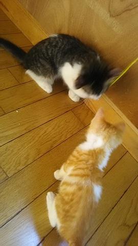 負傷収容だった子猫、梵くんです_f0242002_11251028.jpg