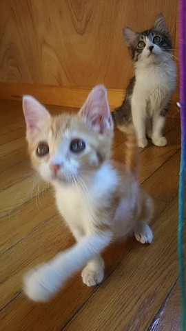 負傷収容だった子猫、梵くんです_f0242002_11255226.jpg