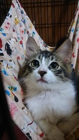 負傷収容だった子猫、梵くんです_f0242002_11261533.jpg