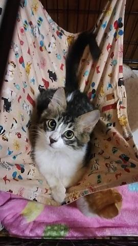 負傷収容だった子猫、梵くんです_f0242002_11263268.jpg