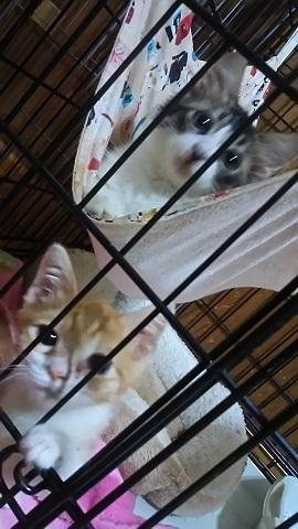 負傷収容だった子猫、梵くんです_f0242002_11265933.jpg