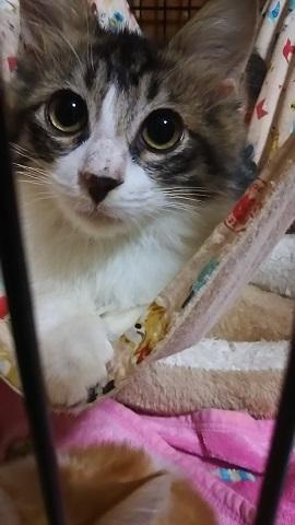負傷収容だった子猫、梵くんです_f0242002_11384519.jpg