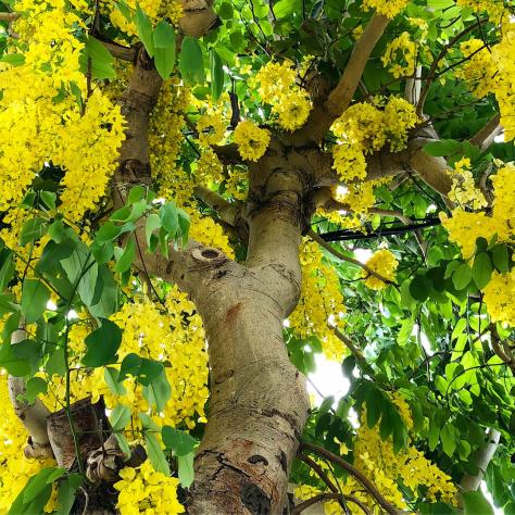 雨の中、黄色い花はなぐさめ色に_c0176406_13470688.jpg