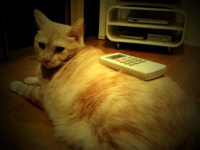 猫と暮らす 3_a0210340_18345521.jpg