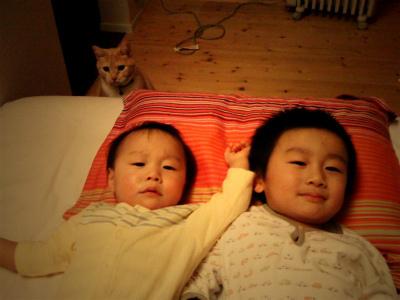 猫と暮らす 3_a0210340_18443216.jpg