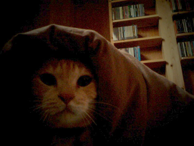 猫と暮らす 3_a0210340_18443240.jpg