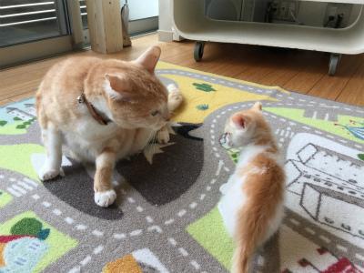 猫と暮らす 3_a0210340_18443248.jpg
