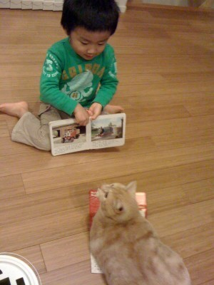 猫と暮らす 3_a0210340_18451303.jpg