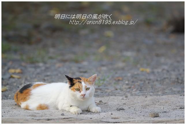 f0361079_19420803.jpg