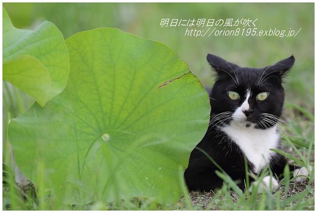 f0361079_19421243.jpg