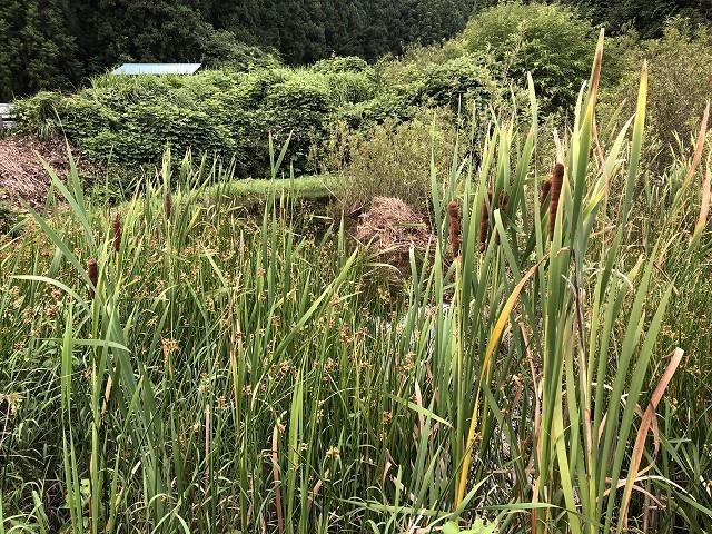 横沢入里山保全地域へ_c0124100_21381890.jpg