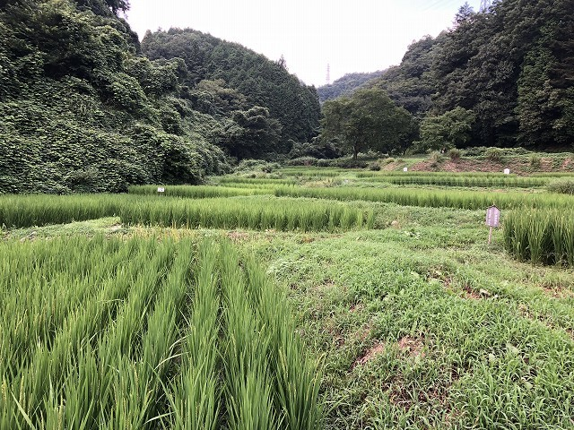 横沢入里山保全地域へ_c0124100_21393766.jpg