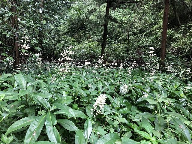横沢入里山保全地域へ_c0124100_21411607.jpg