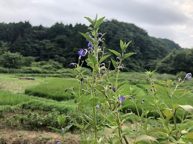 横沢入里山保全地域へ_c0124100_21463698.jpg