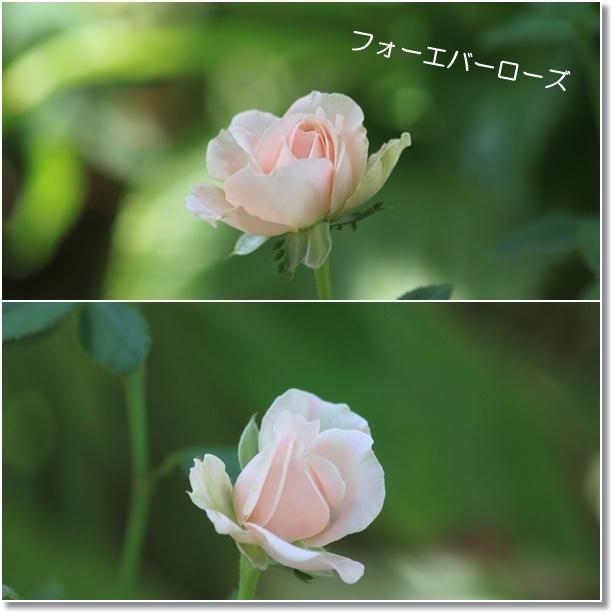 c0325701_02081451.jpg