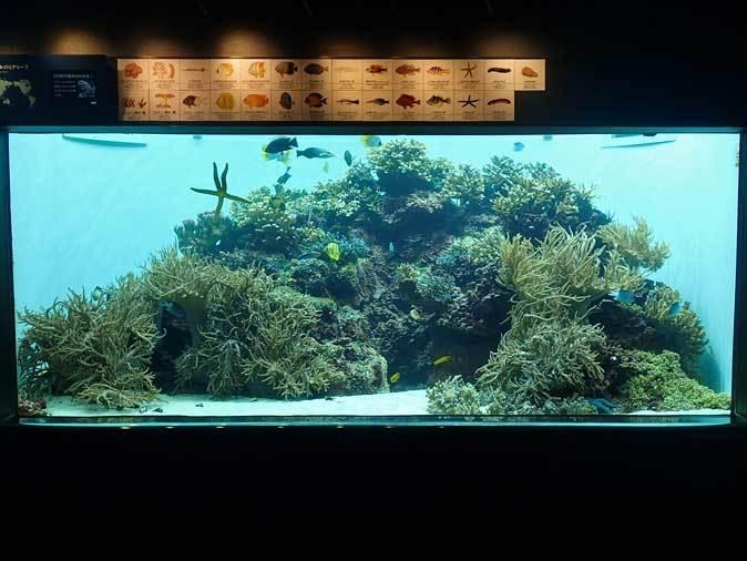 葛西臨海水族園:グレートバリアリーフ【前編】_b0355317_10585208.jpg