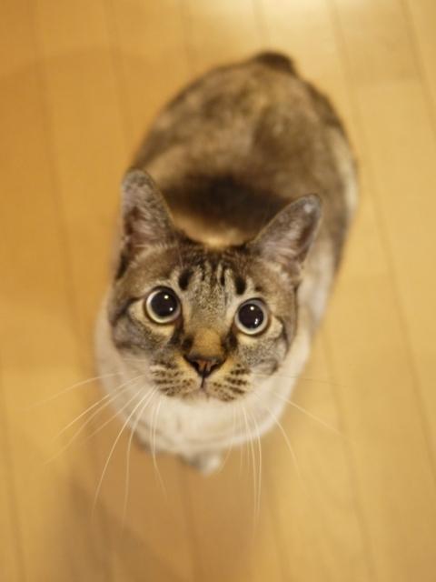 猫のお留守番 ルノーちゃん編。_a0143140_22472182.jpg