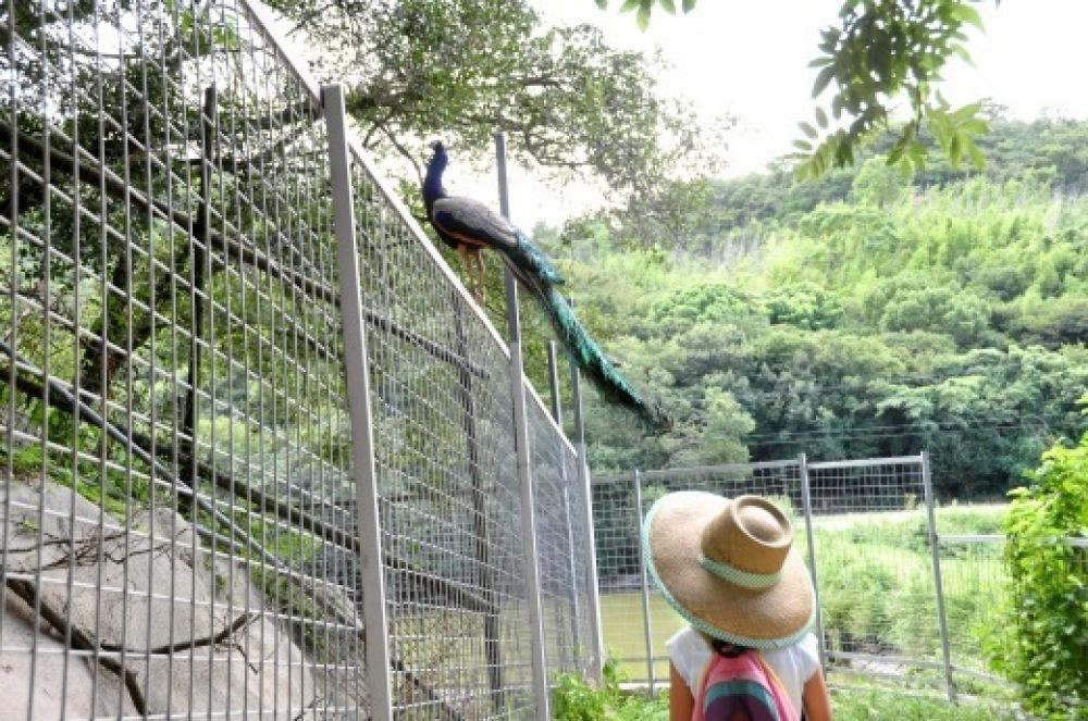 理系な子に育てる 21 しろとり動物園_b0242956_12155932.jpg