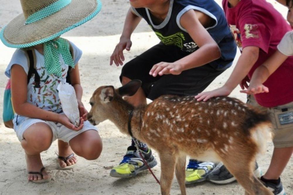 理系な子に育てる 21 しろとり動物園_b0242956_12192684.jpg